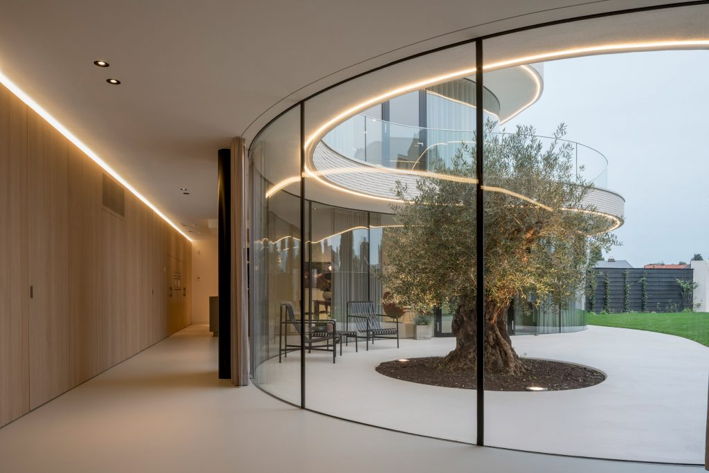 Contemporary house around a mature olive tree (14)